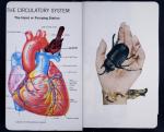 slbradley sketchbook project
