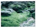Mossy Rocks at Poldhu Beach