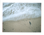 feather on the beach in sandwood bay by slbradley