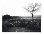 Texas cactus black and white polaroid by slbradley