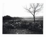 Texas cactus black and white polaroid by slbradley